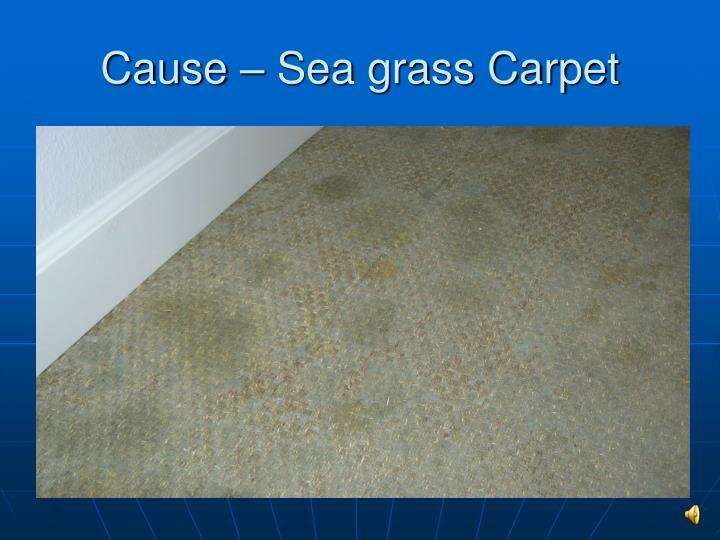 Cause – Sea grass Carpet