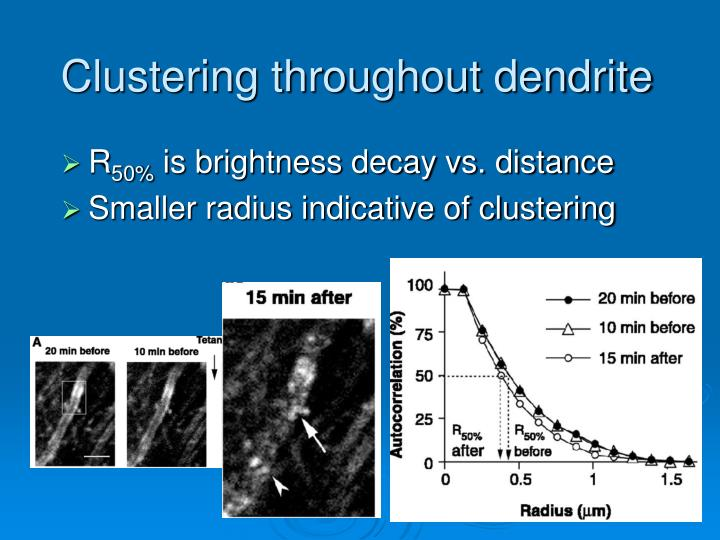 Clustering throughout dendrite