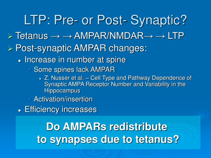 Ltp pre or post synaptic