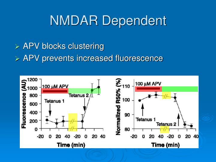NMDAR Dependent