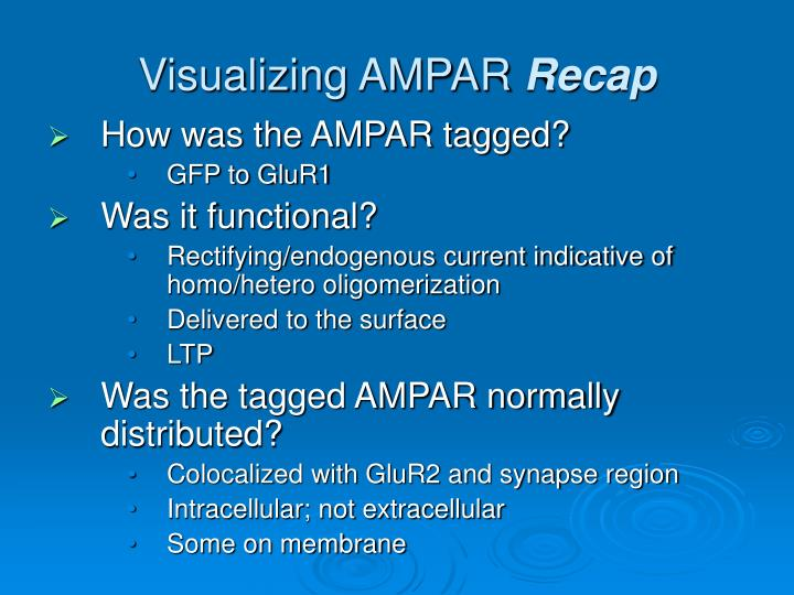 Visualizing AMPAR