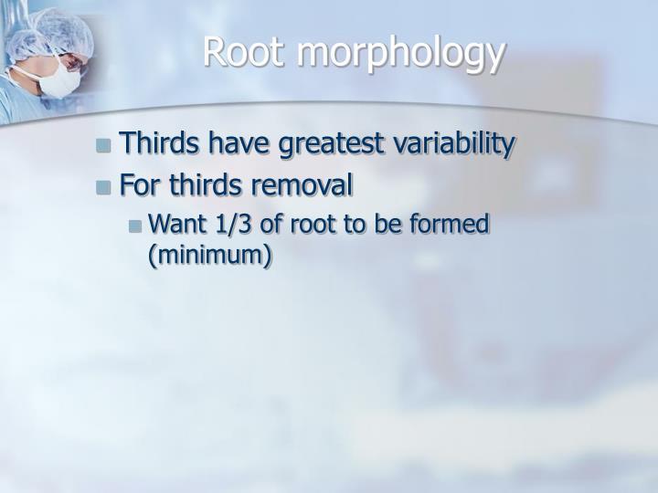 Root morphology
