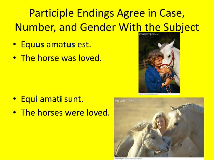 Participle Endings Agree in Case, Number, and Gender With the Subject