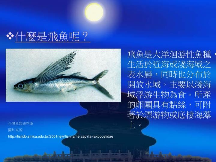 什麼是飛魚呢?