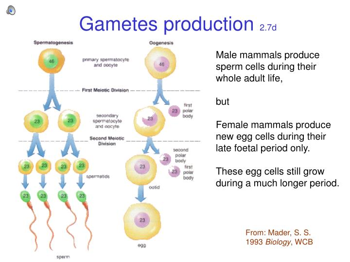 Gametes production