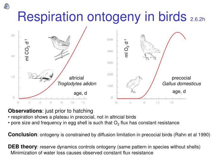 Respiration ontogeny in birds