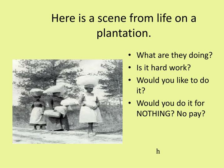 Here is a scene from life on a plantation.