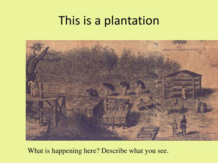 This is a plantation