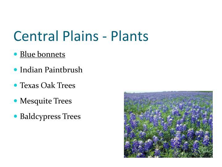 Central Plains - Plants
