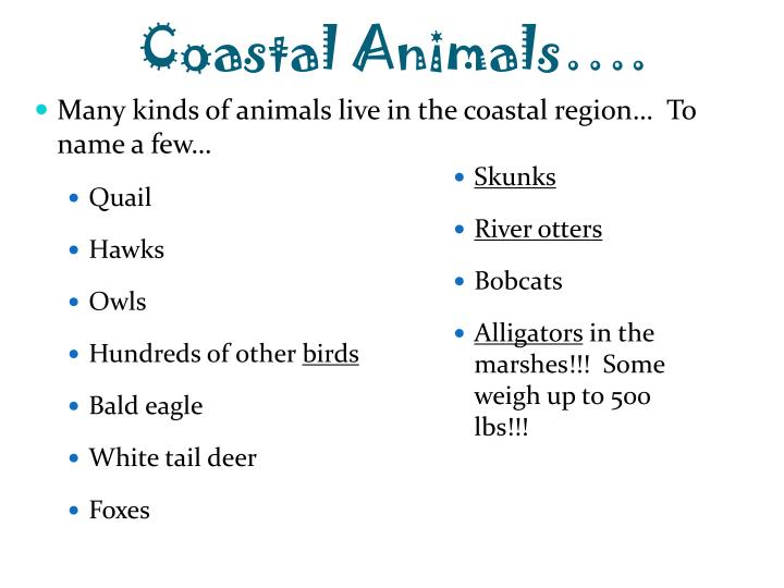 Coastal Animals….