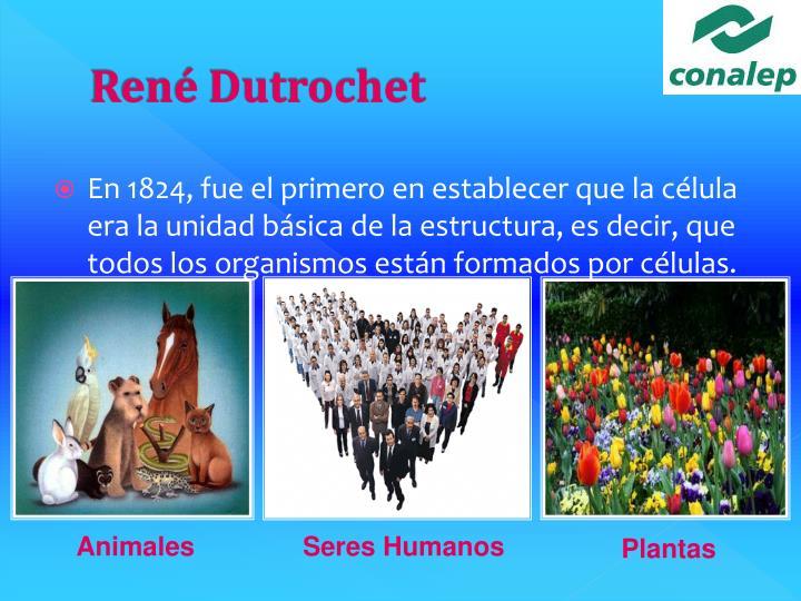 René Dutrochet
