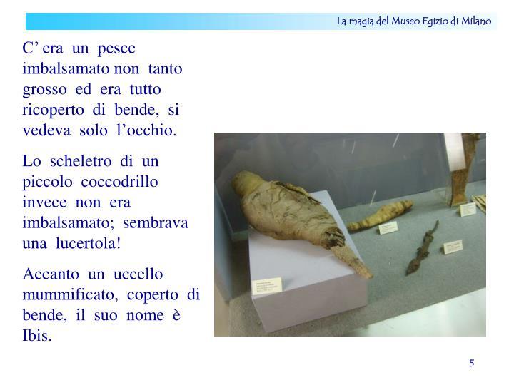 La magia del Museo Egizio di Milano