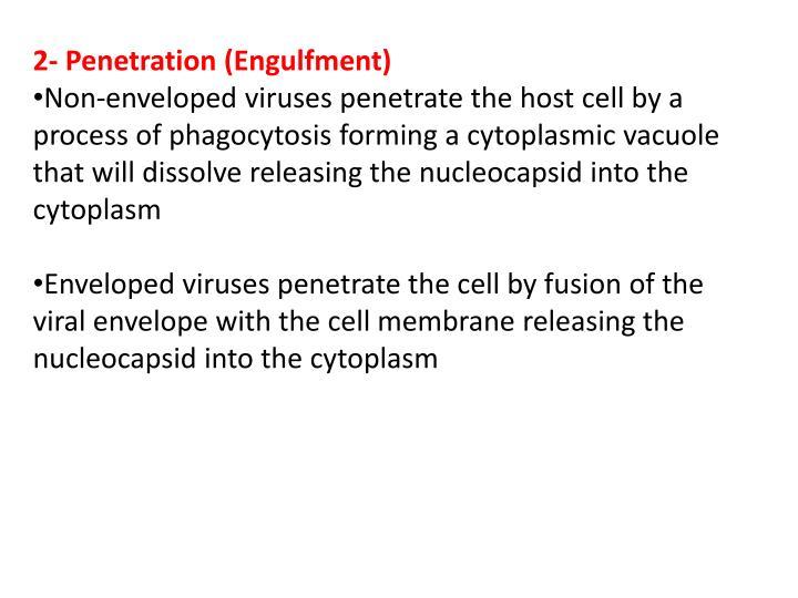 2- Penetration (Engulfment)