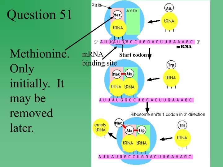 mRNA binding site