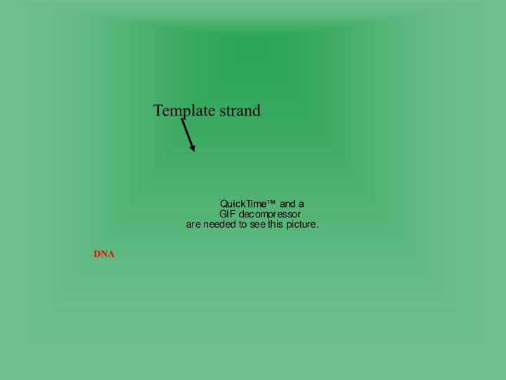 Template strand