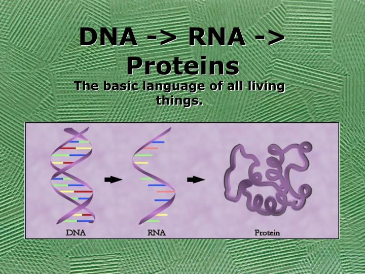Dna rna proteins