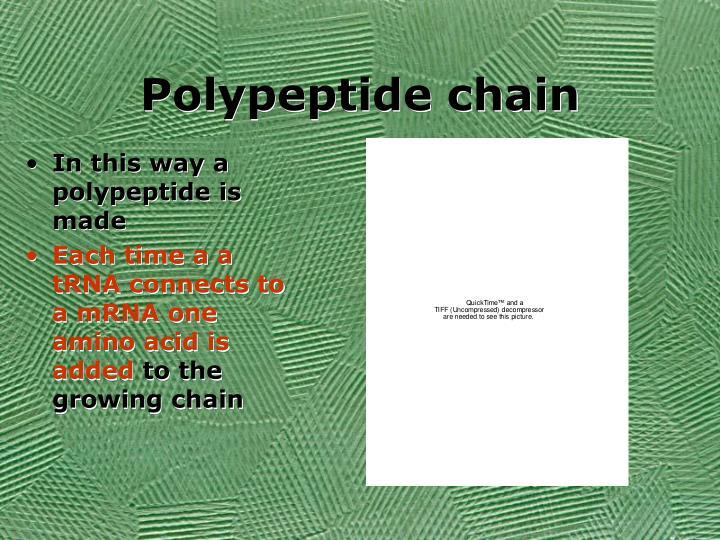 Polypeptide chain