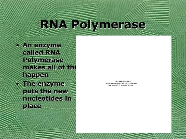 RNA Polymerase