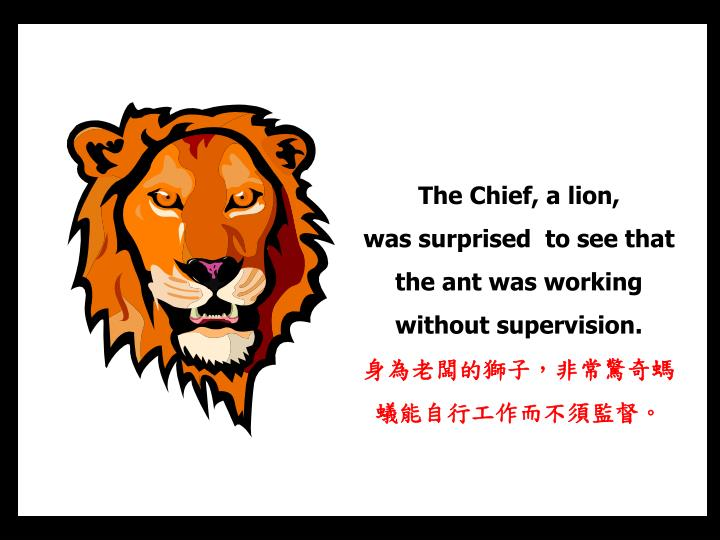 The Chief, a lion,