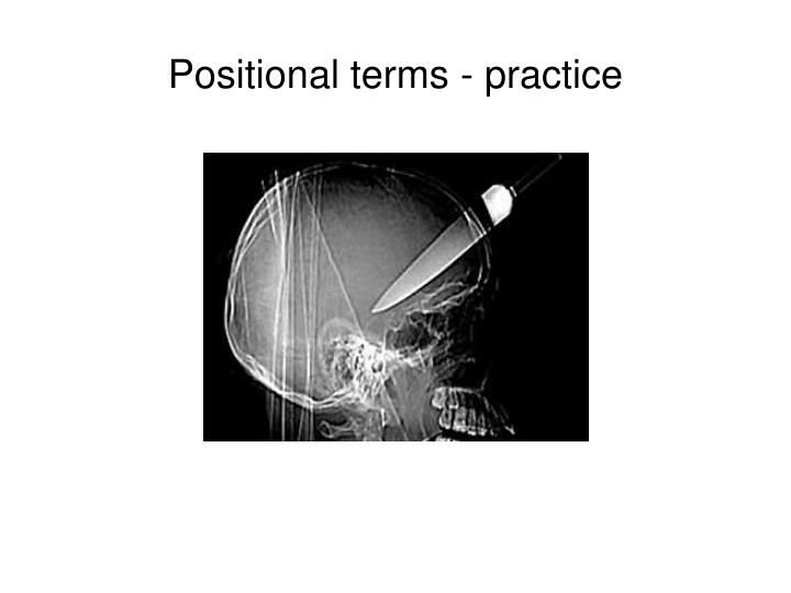 Positional terms - practice