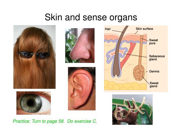 Skin and sense organs