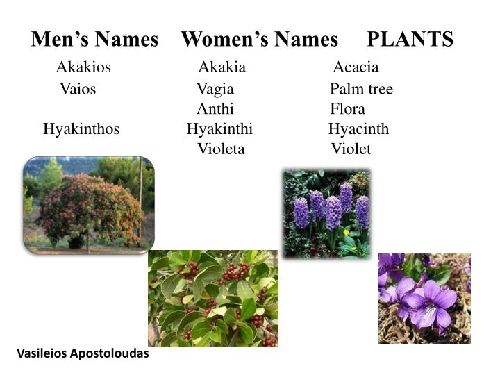 Men's Names    Women's Names     PLANTS