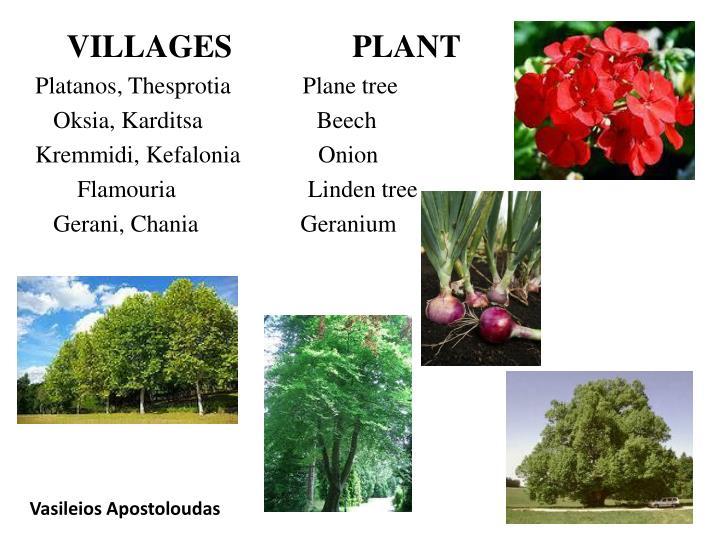 VILLAGES               PLANT