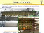staves in halfshells