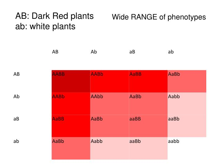 AB: Dark Red plants