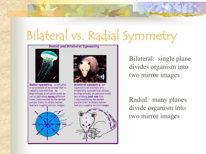 Bilateral vs. Radial Symmetry