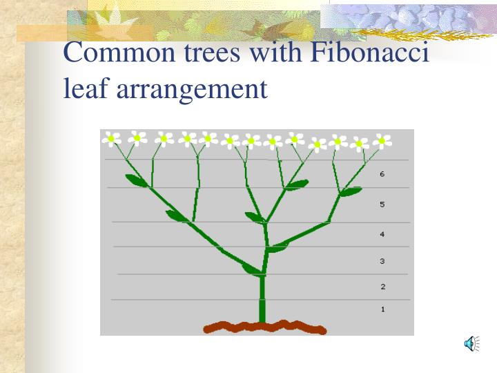 Common trees with Fibonacci leaf arrangement