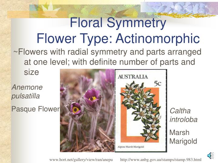 Floral symmetry flower type actinomorphic