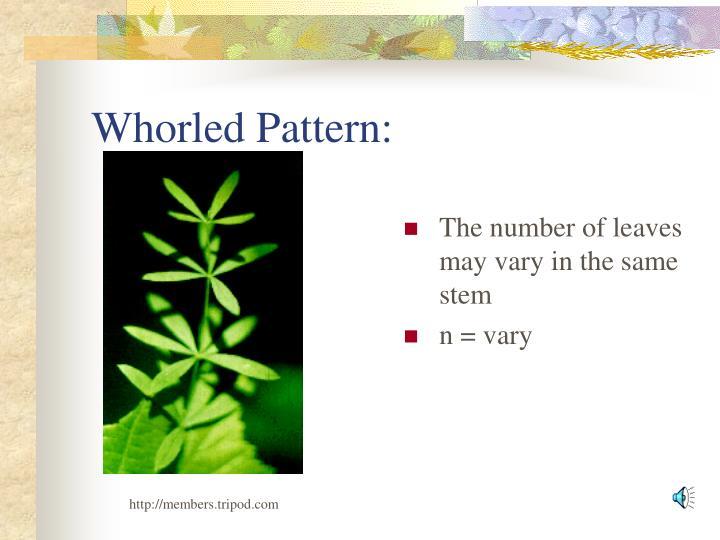 Whorled Pattern: