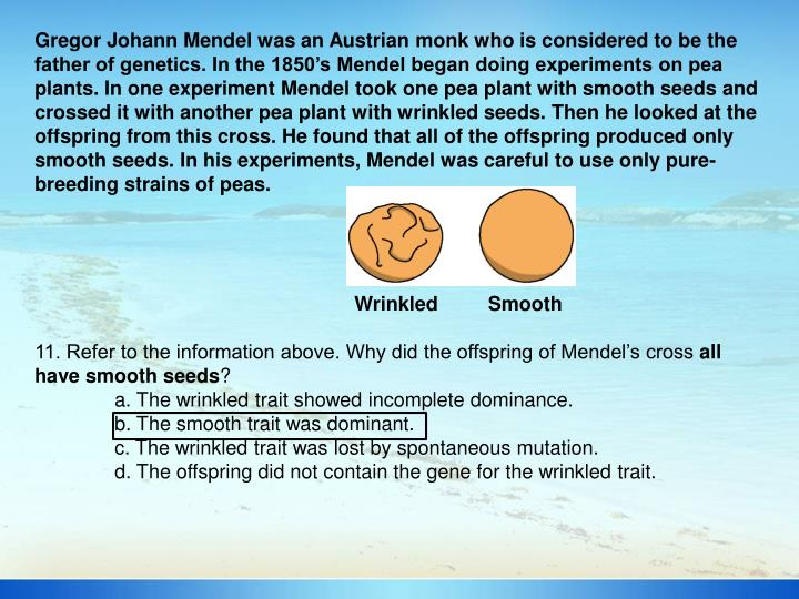 Gregor Johann Mendel was an Austrian monk who is considered to be the father of genetics. In the 1850's Mendel began doing experiments on pea plants. In one experiment Mendel took one pea plant with smooth seeds and crossed it with another pea plant with wrinkled seeds. Then he looked at the offspring from this cross. He found that all of the offspring produced only smooth seeds. In his experiments, Mendel was careful to use only pure-breeding strains of peas.