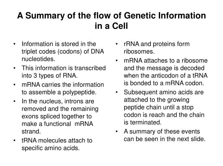 Information is stored in the triplet codes (codons) of DNA nucleotides.