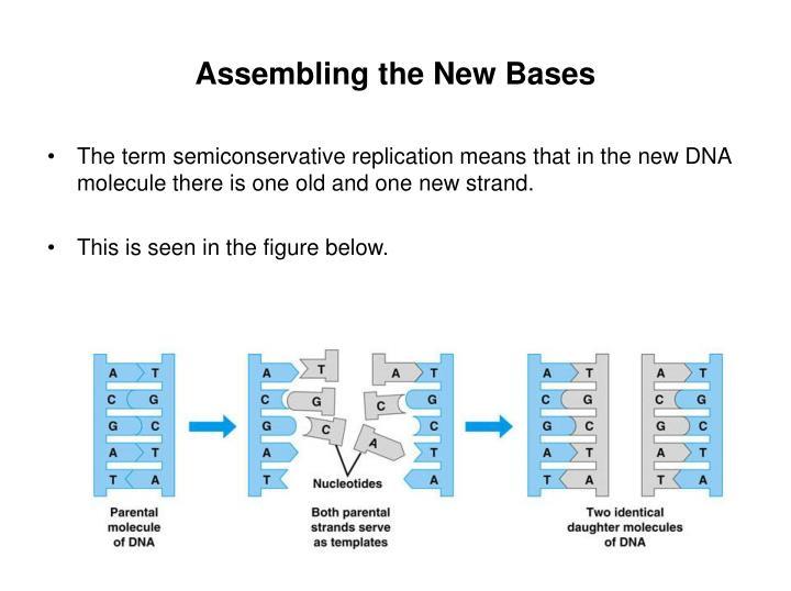 Assembling the New Bases
