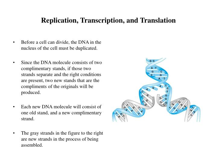 Replication transcription and translation