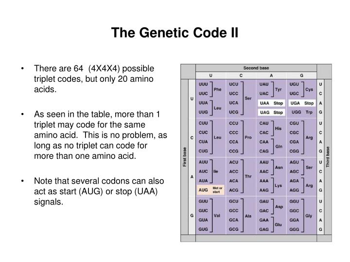 There are 64  (4X4X4) possible triplet codes, but only 20 amino acids.