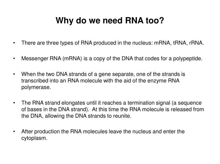 Why do we need RNA too?