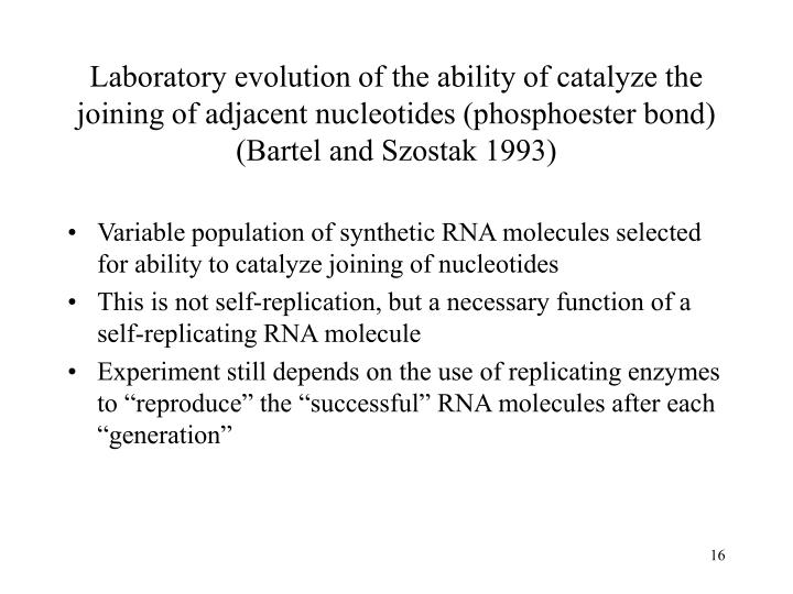 Laboratory evolution of the ability of catalyze the joining of adjacent nucleotides (phosphoester bond) (Bartel and Szostak 1993)
