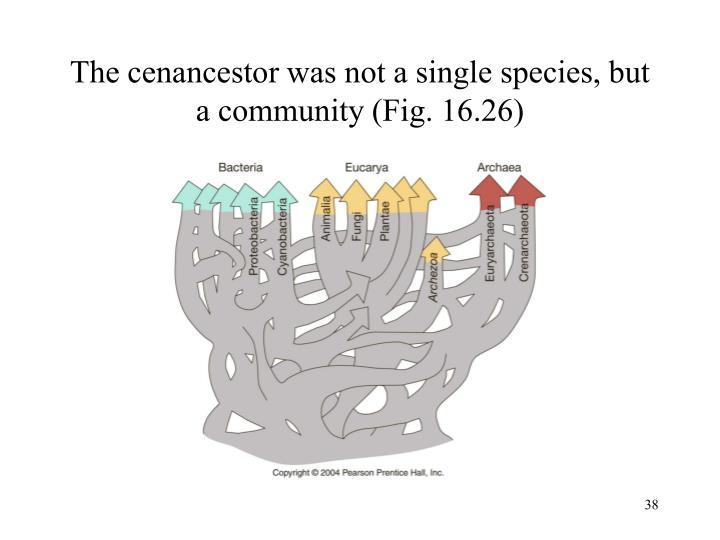 The cenancestor was not a single species, but a community (Fig. 16.26)