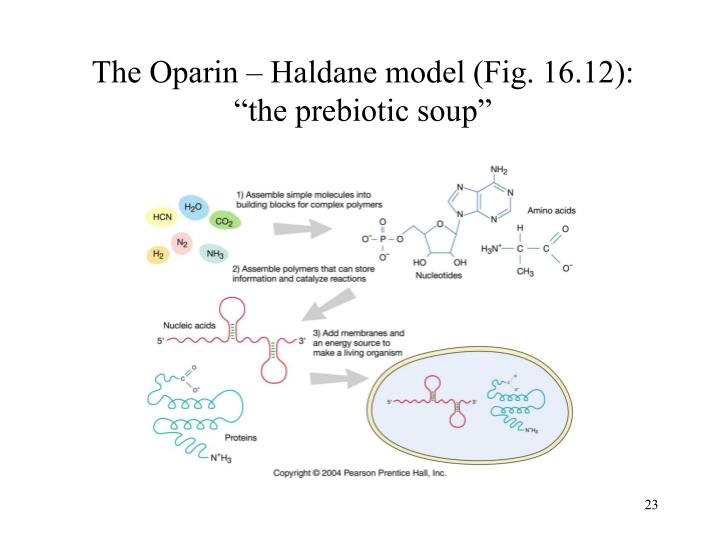 The Oparin – Haldane model (Fig. 16.12):