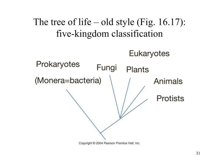 The tree of life – old style (Fig. 16.17):