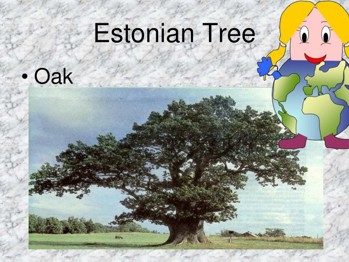 Estonian Tree