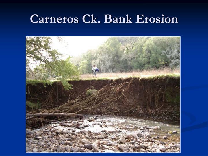 Carneros Ck. Bank Erosion