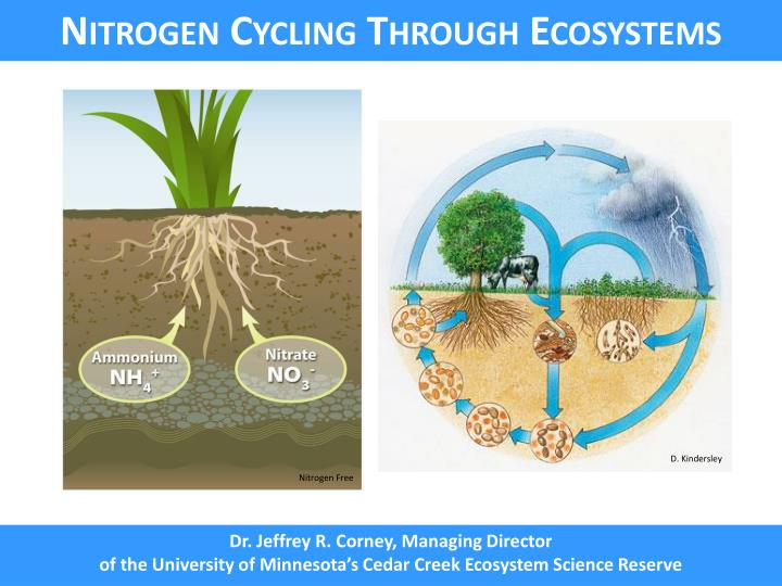 Nitrogen Cycling Through Ecosystems