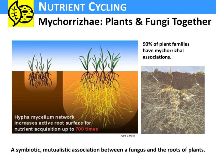 Mychorrizhae: Plants & Fungi Together