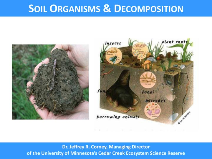 Soil Organisms & Decomposition