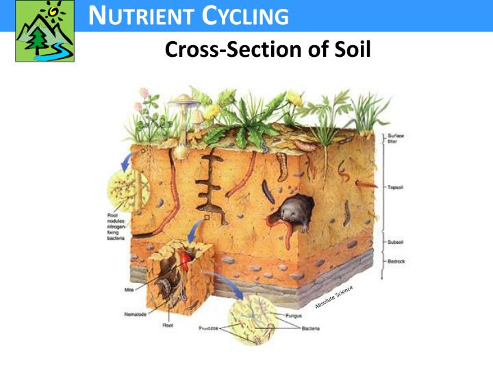 Cross-Section of Soil