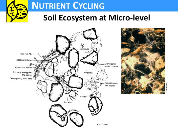 Soil Ecosystem at Micro-level